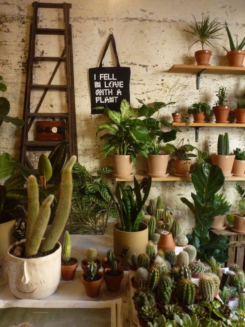 espai-joliu-plants